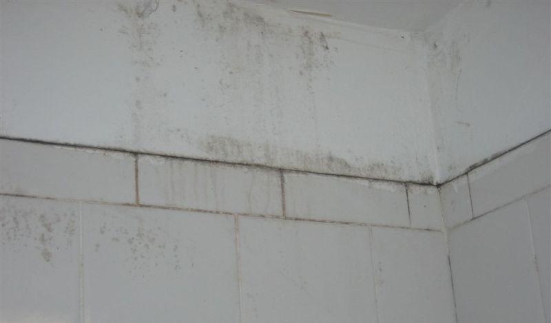 Cleaning bathroom mould in Bondi